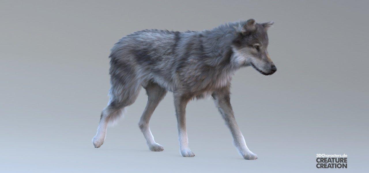 Lavando - Wolf