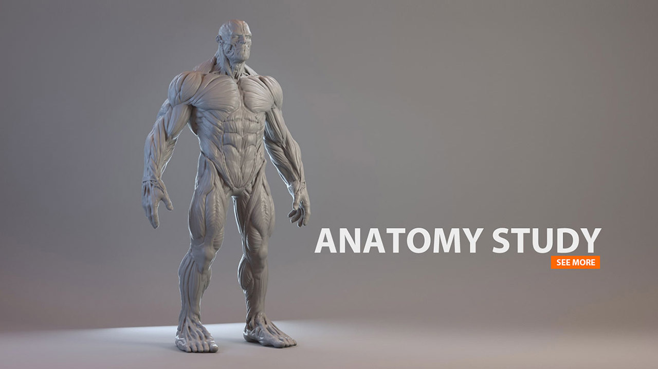 The incredible Hulk | Anatomy Studies