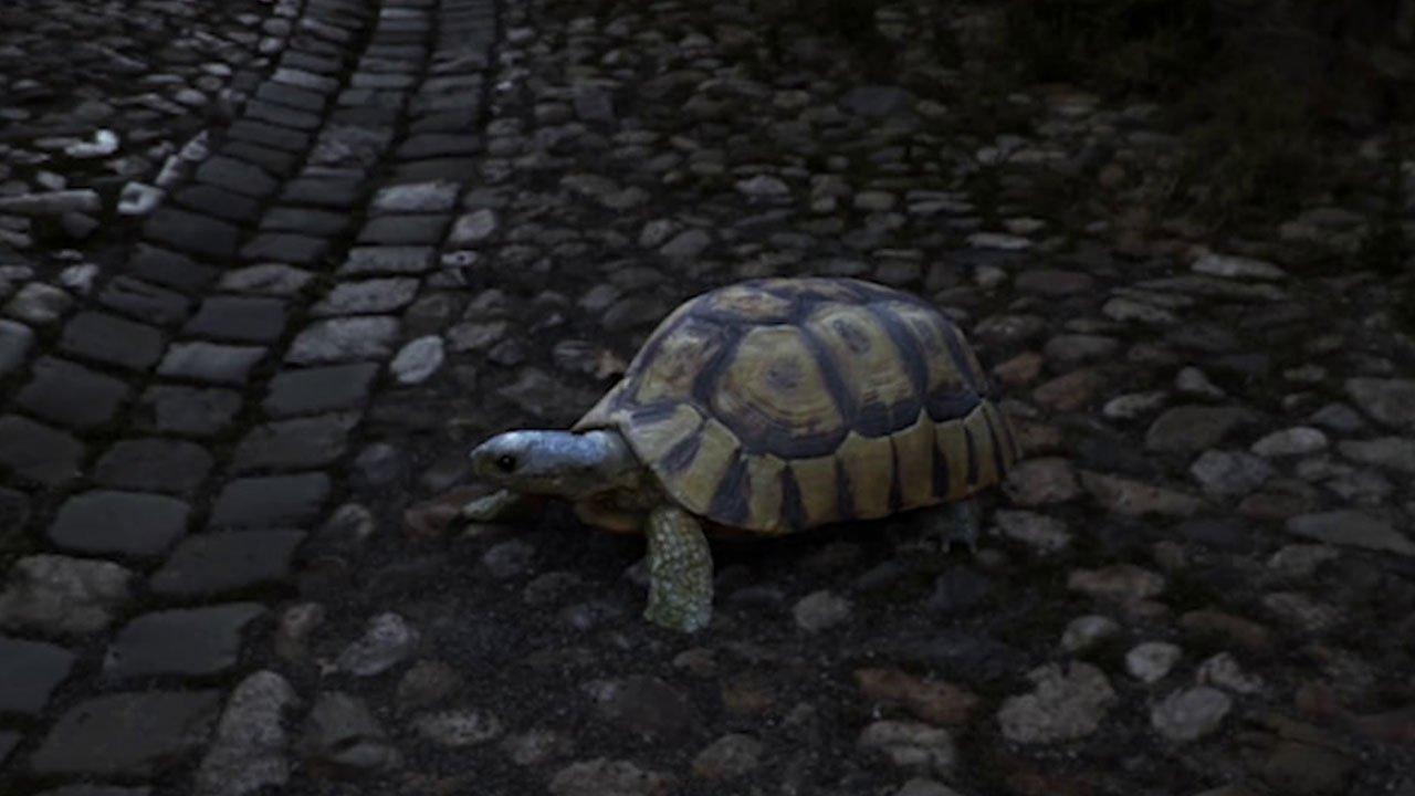 TURTLE Dance | 3D Creature Animation