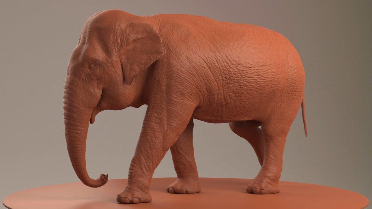Elephant - Fischer